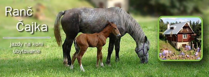 Ranč Čajka, kone